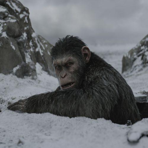 قسمت جدید Planet of the Apes