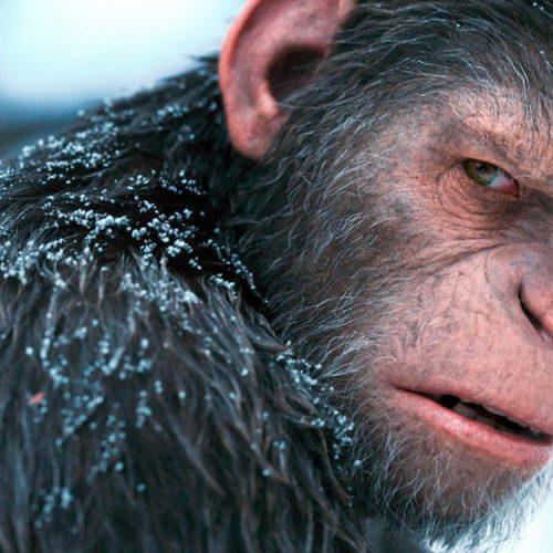 سیاره میمونها